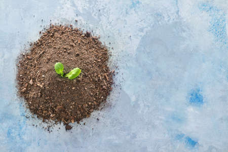 Heap of soil and plant on color background. Earth day celebration