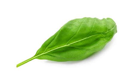Fresh green basil leaf isolated on white