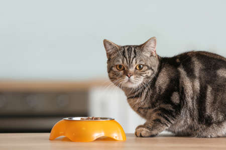 Cute cat near bowl with food on kitchen table