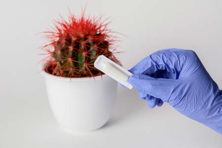 Doctor's hand with hemorrhoidal suppository and cactus on light background