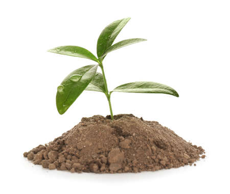 Heap of soil with young plant on white background