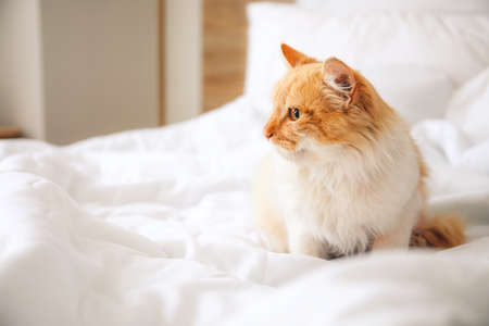 Cute cat sitting on bed at home