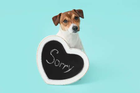 Cute dog and chalkboard with word SORRY on color background
