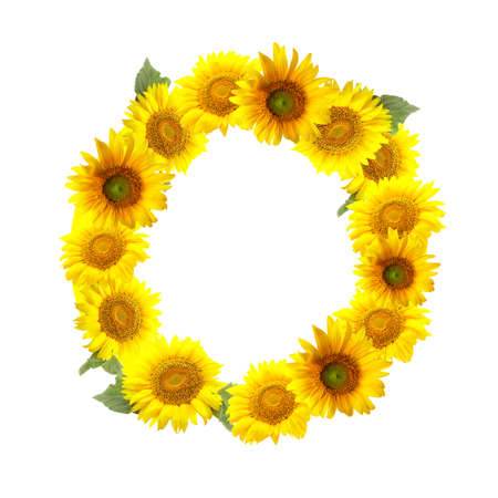 Letter O made of beautiful sunflowers on white background Imagens
