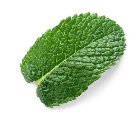 Fresh green mint on white background Imagens