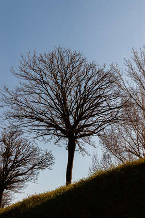 Magnificent backlight photos of trees typical of the Italian peninsula