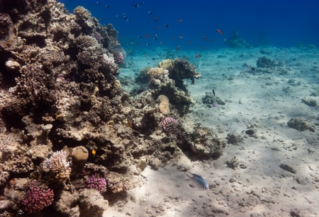 The underwater view of coral reef near Dahab, Egypt, in real (not amplified) colors. Stock Photo
