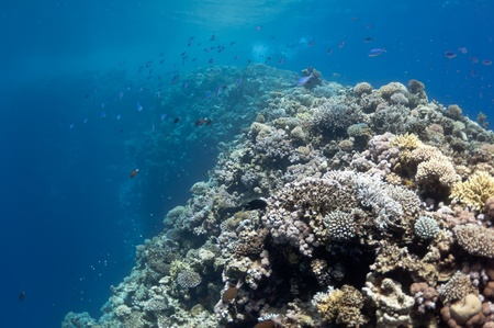 The picture shows the Red Sea coral reef near the city of Dahab, Egypt. There are different types of corals and fishes there.