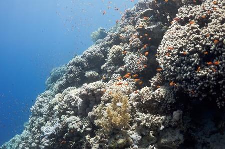De foto toont de Rode Zee koraal rif nabij de stad Dahab, Egypte. Er zijn verschillende soorten koralen en vissen daar. Stockfoto