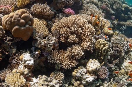 De afbeelding toont de Rode Zee koraalrif in de buurt van de stad van Dahab, Egypte. Er zijn verschillende soorten koralen en vissen daar.