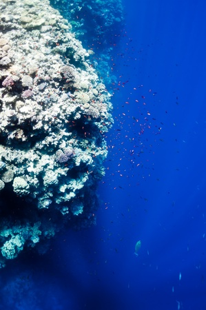 The picture shows the Red Sea coral reef near the city of Dahab, Egypt. There are different types of corals and fishes there. photo