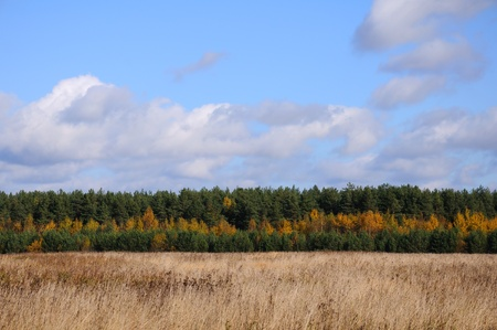 Straight lines of blue sky with clouds, green and yellow autumn trees and the line of grey meadow