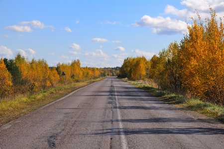 An old, patched asphalt road between autumn bushes and trees