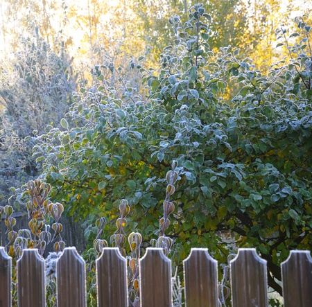 The picture shows autumn morning hoarfrost on a fence and trees in back sun lighting