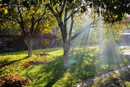 Sunbeams shine through autumn trees on a cottage garden