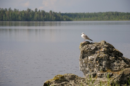 The picture of Karelian forest and flowing river