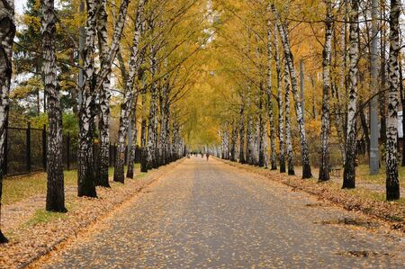 Ths is a picture of the walking lane in the autumn park with golden leaves
