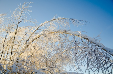 Beautiful view of the shiny and frozen winter forest after the january icy rain (at the blue sky background) photo