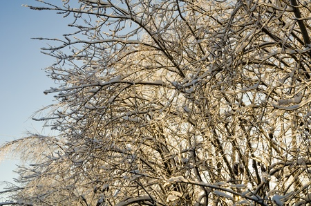 Beautiful view of the shiny and frozen winter forest after the january icy rain (at the blue sky background) Stock Photo - 10760965