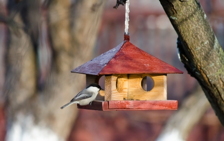 Small titmice tries to get sunflower seeds from manger Stock Photo