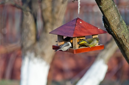 Small titmice and greenfinch try to get sunflower seeds from manger Stock Photo