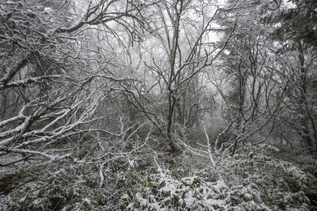 The picture of a winter forest in Huanglong National Park (China) photo