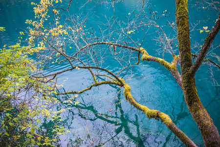 Amazing colors of mossy tree and deep lake at Jiuzhaigou Valley National Park, China