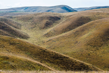 hassock: Changes of grass color on Tibetan mountains slopes