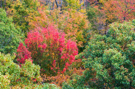disarm: Close up view of red, orange, green and yellow-coloured fall trees near Dorset town, Canada