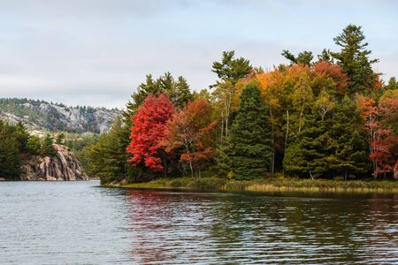 Multicoloured fall trees at a lake edge of Killarney Provincial Park, Canada