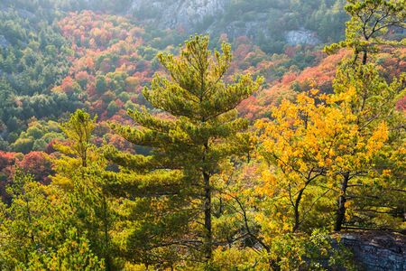 disarm: Rich colors of fall trees on a mountain slope near George Lake, Killarney, Canada