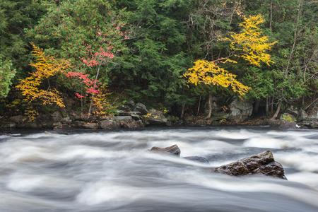"muskoka: Colourful fall forest on a riverside of ""frozen-motion"" Oxtongue river, Muskoka, Ontario Stock Photo"