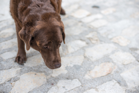 Old beaten dog avoids eye-contact with an unknown stranger