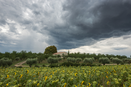 sombre: A massive threatening dark thundercloud moves over private house and sunflower field