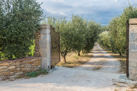 Opened gates are inviting to the beautiful garden with olive trees Stock Photo