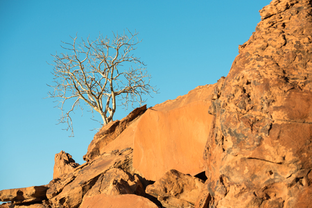 A lonely tree is growing up at a rocky mountain slope with the blue sky background