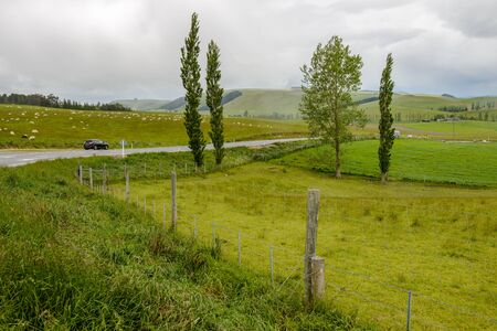 Green fields with a lot of sheep along the Geraldine-Fairlie Highway