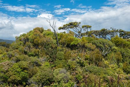 Old dead trees and impenetrable green jungle of Ship Creek at West Coast, New Zealand Stockfoto