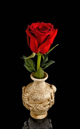 two objects: Red rose on a white background. A ceramic vase on a black background. Two objects. . Close up.  The isolated object on a black background with reflection. Vertical format.Color. Stock Photo
