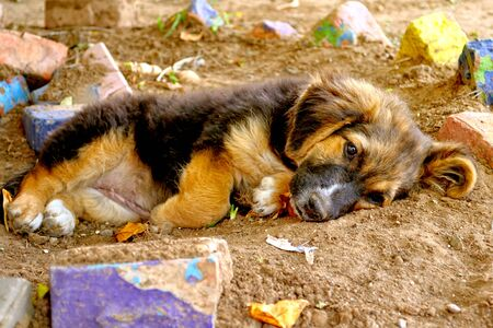 The puppy with sad eyes lies on the earth. Portrait. Outdoors. Horizontal format. Color. Natural lighting. Stock photo.
