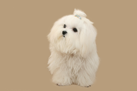 doggie: white doggie on a light background Stock Photo