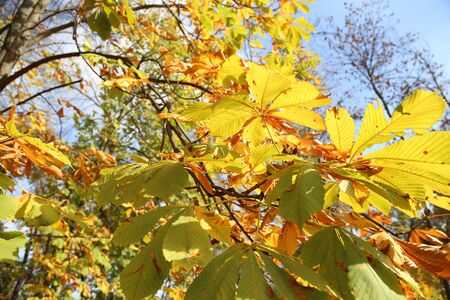 Golden autumn - yellow leaves, sunny day and blue sky Stock Photo