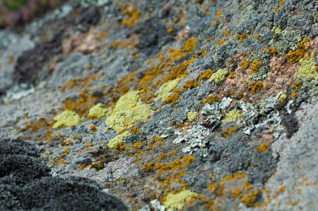 viability: granite stones with different types of lichen and moss close up