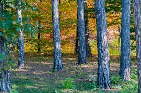 Bright colorful autumn forest. Picturesque nature. Part forest outdoors. Bright autumn green leaves on trees.