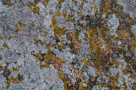 Surface of rock is covered with colorful lichen. Background from gray-green and brown-green lichens and mosses. Microorganisms in nature living on stones. Close-up. Horizontal photo. Outdoors. Stok Fotoğraf