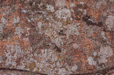 Surface of rock is covered with colorful lichen. Microorganisms in nature living on stones. Background from gray-green and brown-green lichens and mosses. Close-up. Horizontal photo. Outdoors.