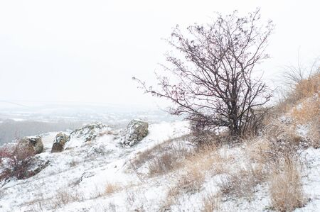 Lonely beautiful tree on snowy hill near town. Winter picturesque beautiful landscape. Clear cold light frosty sunny morning. Panoramic view from hill on winter day. Horizontal photo. Outdoors.