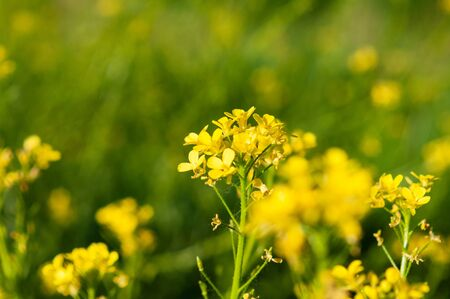 bunch of yellow flowers growing on a green stalk against a background of blurry yellow flowers