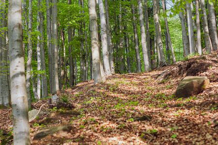 Path along slope mountain rises to top ground covered dry leaves Stock Photo