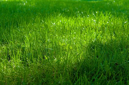 Background from green, juicy grass on field, spring meadow nature, bright seasonal outdoor lawn, lush, soil cover. Sunlight and soft shadow on high herb, top view.